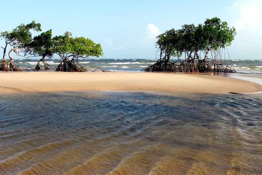 Foto da Ilha de Marajó
