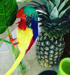 Details... #havanaparty #parrot #housewa
