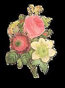 Flower%20Illustration%20Reverse%20_edite
