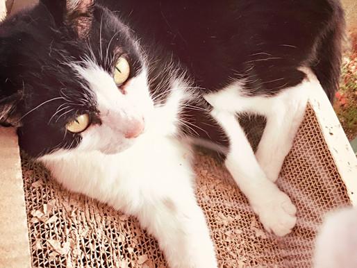 ネコと幸せに暮らす、猫好きが書いた雑記ブログ「ねこんさる」さんに紹介されました!