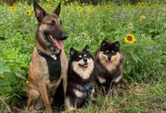 Belial, Gaïa et Sookie