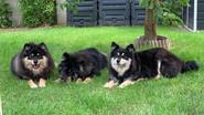 Sookie, Sia et leur maman Gaïa