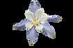 white-flower-2346952__340.png