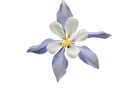 white-flower-2346952__340.png