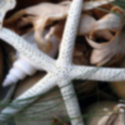 Shells, driftwood and starfish