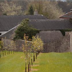 Ballyfin Orchard