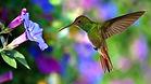pink hummingbird.jpg