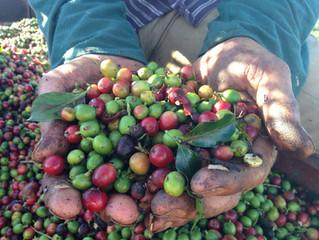 Agropecuária: semeando empregos