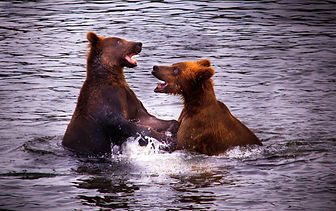 rev bear fight (1 of 1).jpg