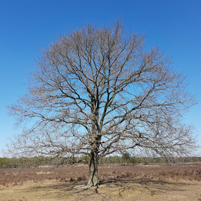 De weerbare Straatboom