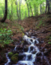 landscape-4484390_1920.jpg