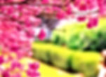 Cherry Tree_edited.jpg