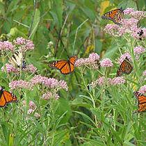 PollinatorWorks.jpeg
