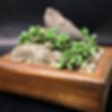 Cactus box.png