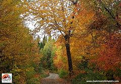 automne www.chaletssaintfelixdotis.com.j