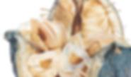 Cardiocrinum giganteum detail.png