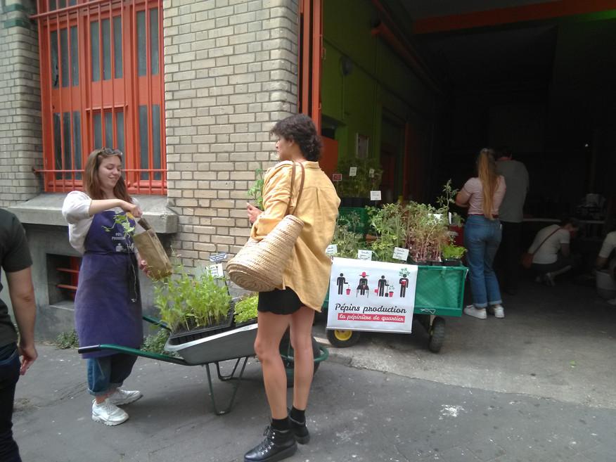 Après-midi agriculture urbaine avec Pépins Production