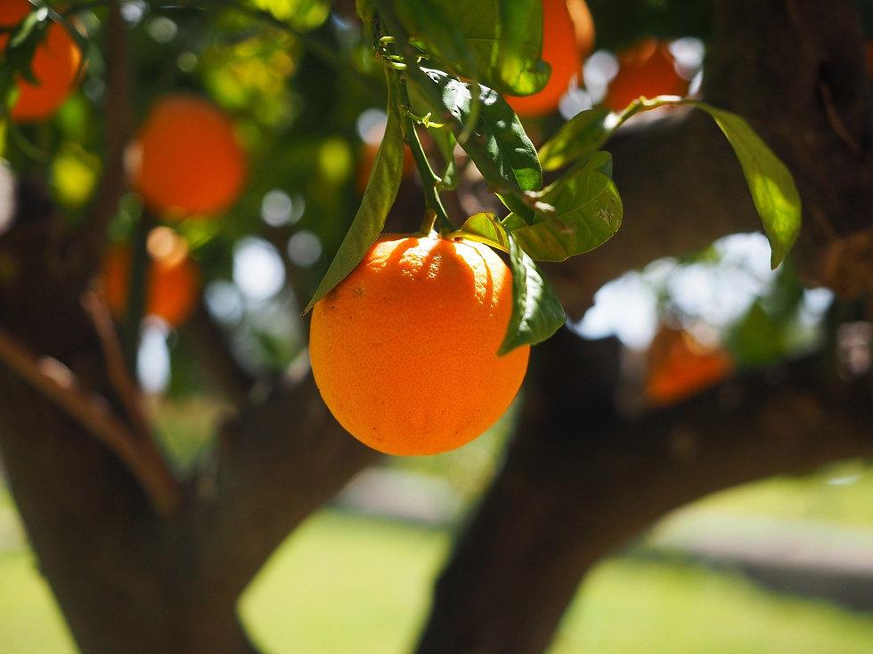 orange-1117645_1920.jpg