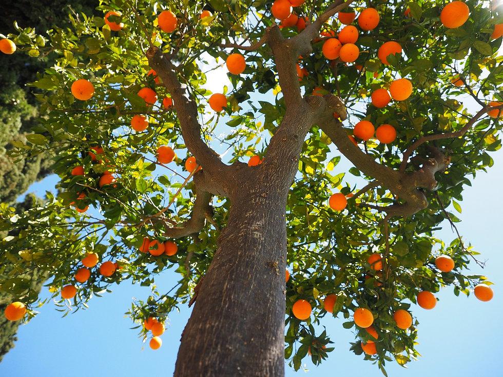 oranges-1117644_1920.jpg