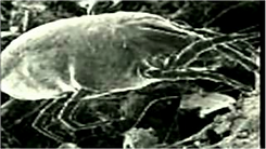 More at ‪http://quickfound.net/links/military_...  US Navy Training Film FN-6943d  Public domain film from the National Archives, slightly cropped to remove uneven edges, with the aspect ratio corrected, and mild video noise reduction applied. The soundtra