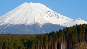 寄稿記事「鎌倉杉の香り」が業界紙「Perfumer & Flavorist 」に掲載