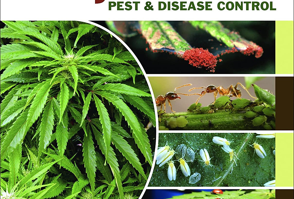 Marijuana Pest and Disease Control: How to Protect Your Plants