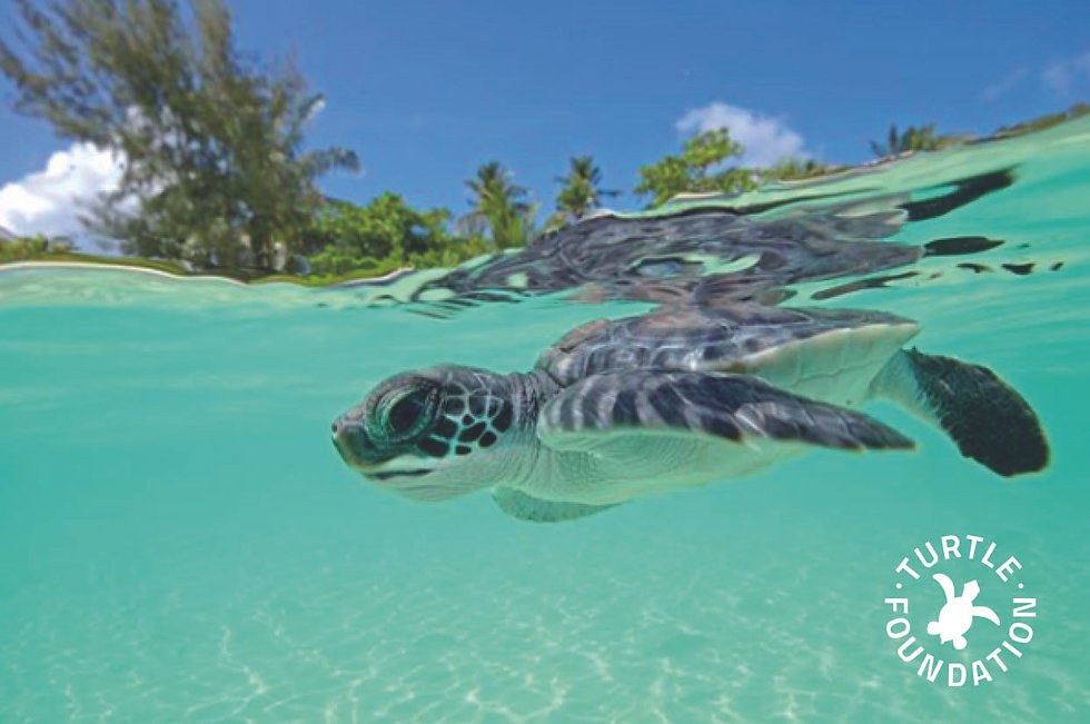 TURTLE image 05 TurtleFoundation.jpg