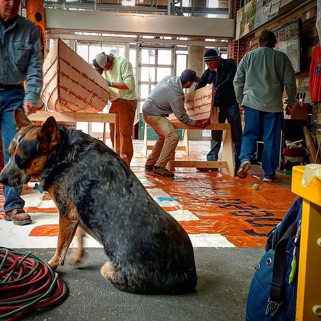 Grizz the Shop Dog