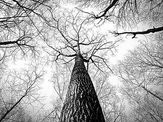 branches-238379_1920.jpg