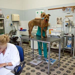Le veterinarie fanno un controllo.