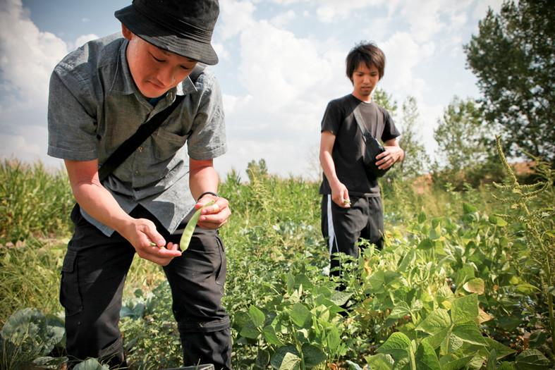 Yuuki Kanzo 25anni (a sinistra) raccoglie una verdura biologica. Dopo l'incidente è tornato all'Università di Fukushima, dove studia bio-ecoingegneria: i metodi scientifici per la depurazione biologica delle acque contaminate. È volontario del CRMS si occupa della misurazione della radioattività del corpo e negli alimenti.