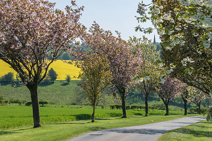 Wolds Away Blossom Trees B.jpg