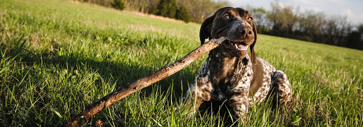 stock-photo-a-cute-dog-in-a-field-chewin
