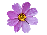 flower_edited.png