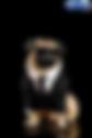 Pug%20Frank_edited.png