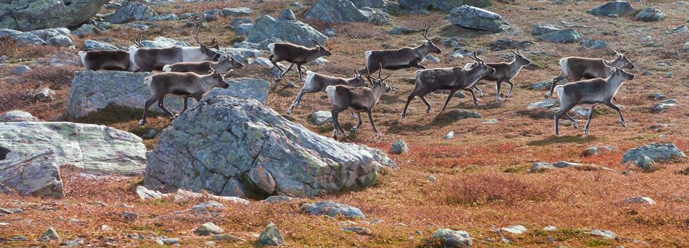Jämtland_20110918_4581.jpg
