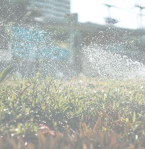 Watering the lawn_edited.jpg
