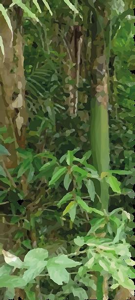 forest_invertAsset 29@8x.png