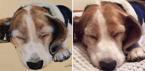 Sammy Photiou-Wood, Artist, Portrait, Dog, Snoop, Beagle, Sleeping Dog