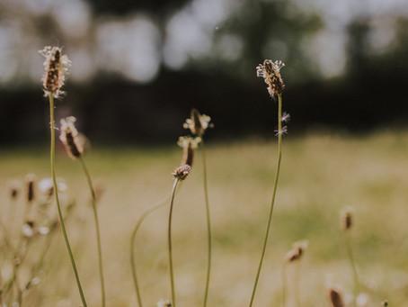 La magique poésie du plantin : Quand mauvaise herbe du jardin et mamans se ressemblent...
