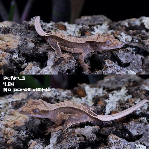 PeNo_3