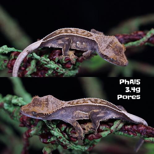 PhAl_5
