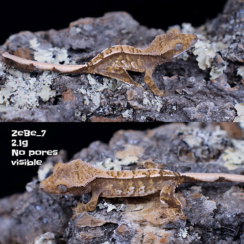 ZeBe_7