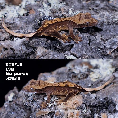 ZeBz_5