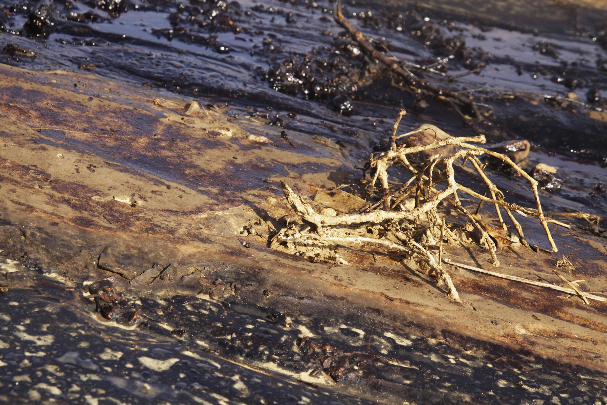 Catastrophic Negev Oil SpillCatastro