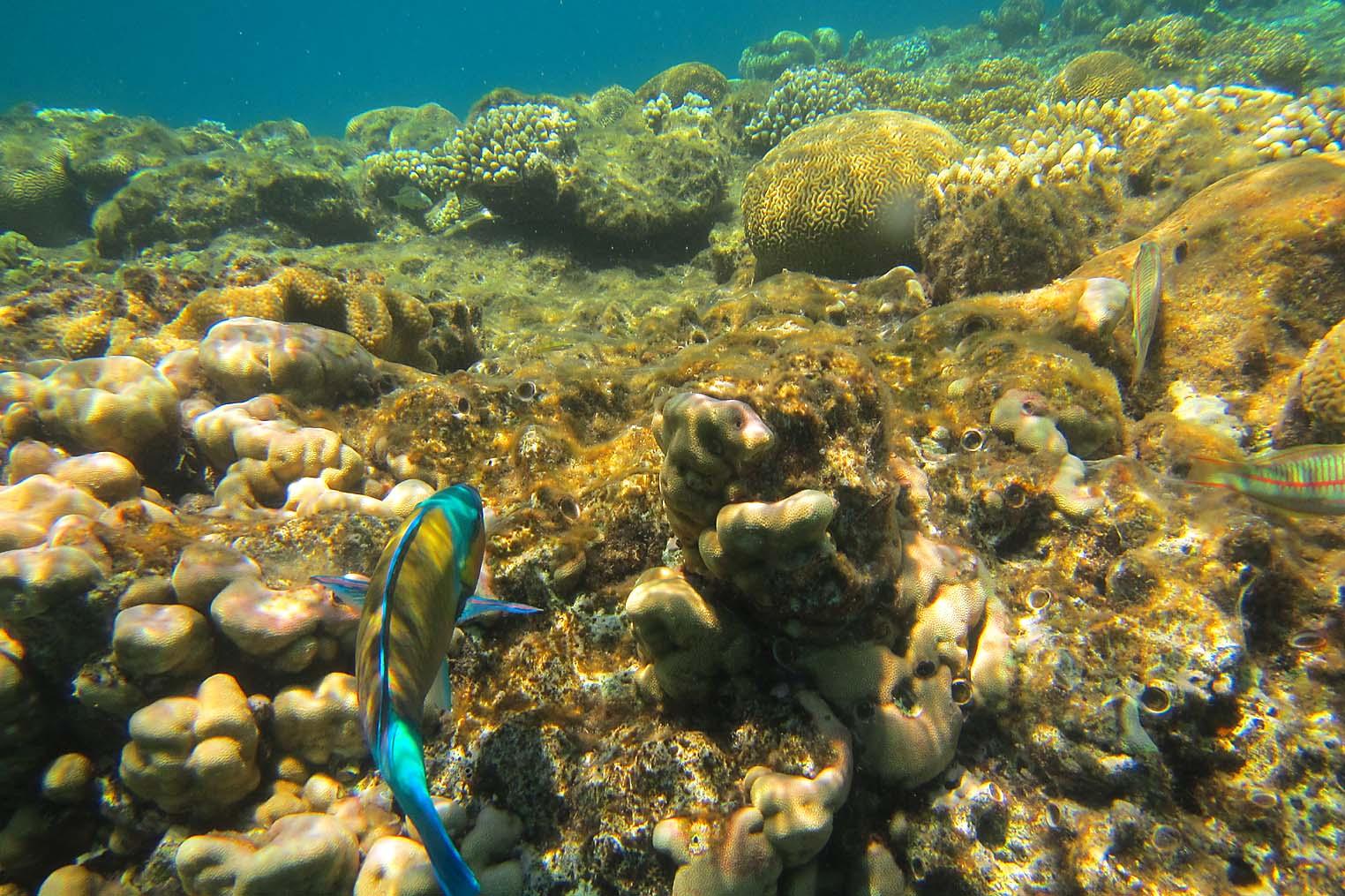 The Red Sea Shore