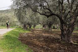 Mekora Organic Farm, Carmelim Region