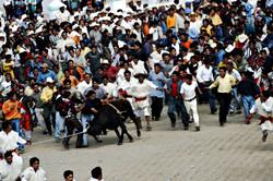 Carnaval Bull, Chamula, 2003
