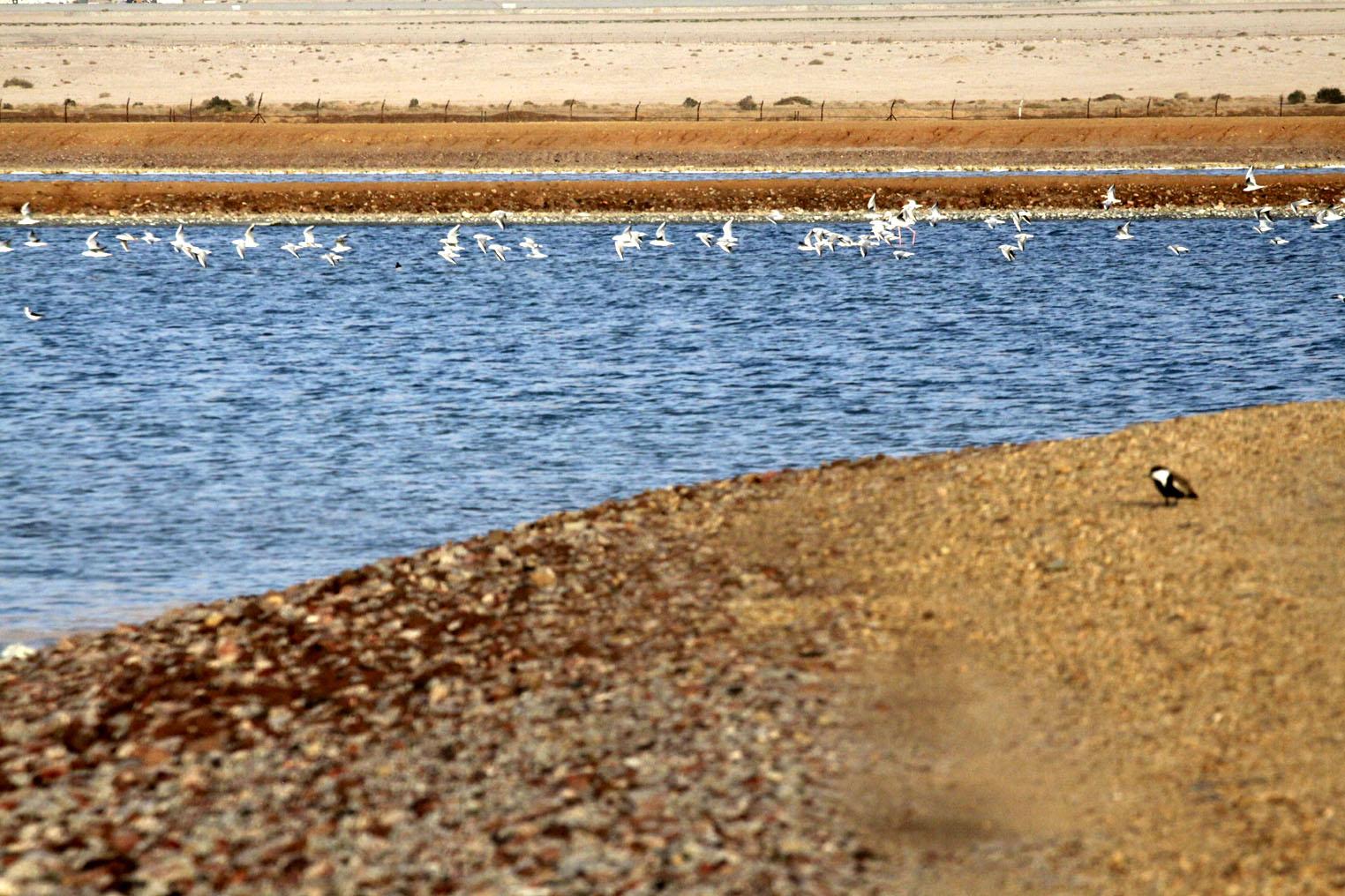 Timna:back towards Eilat
