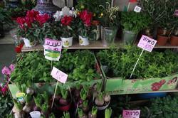Tel Aviv, Carmel market